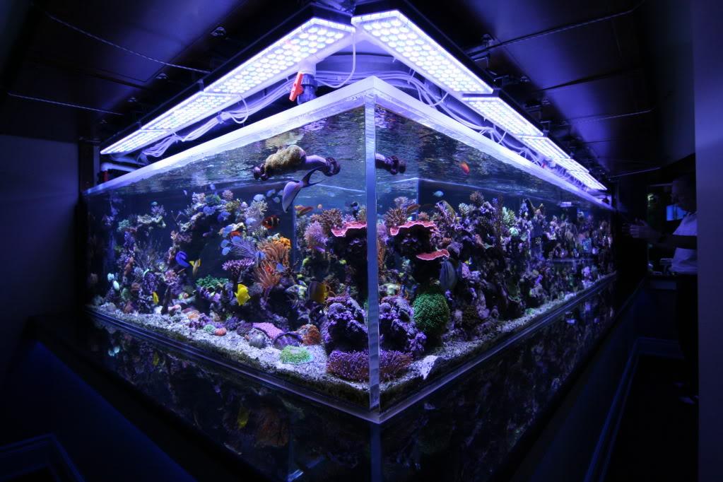 led aquarium lights 5. Black Bedroom Furniture Sets. Home Design Ideas